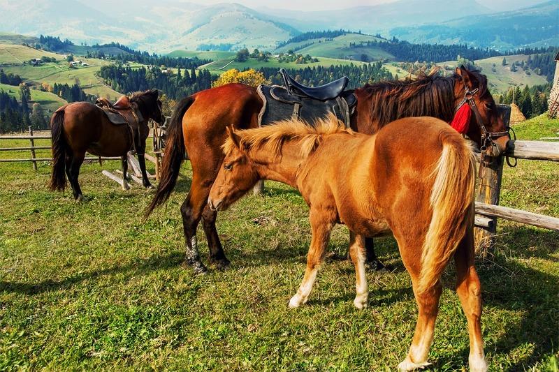 """Результат пошуку зображень за запитом яремче коні"""""""
